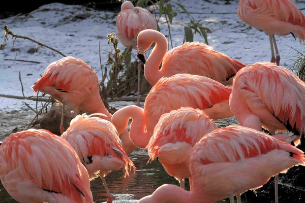 Flamingos im Gegenlicht