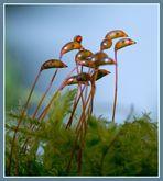 Flamingos im Lilliput-Land