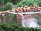 Flamingos im Zoo