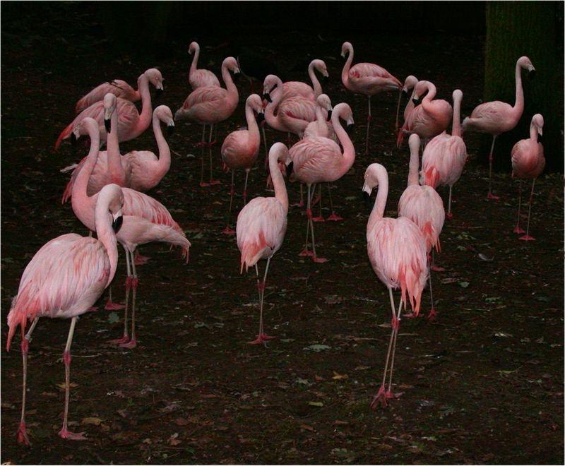 Flamingos in der Dämmerung