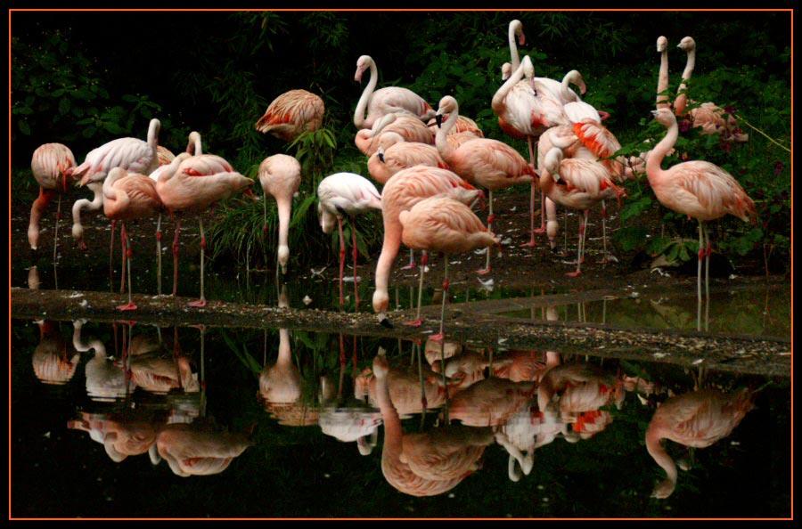 Flamingos in Duisburger Zoo