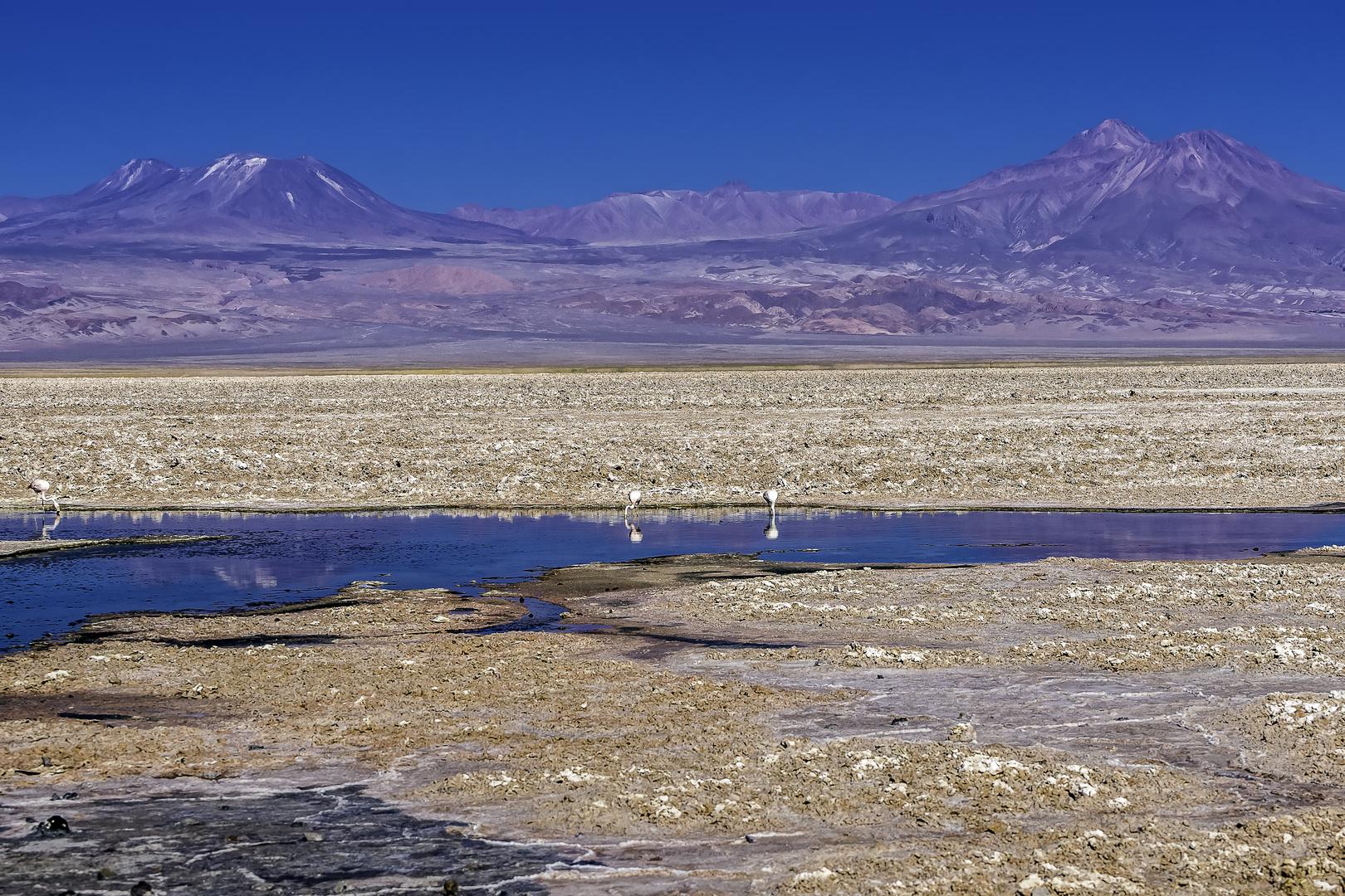 Flamingos in einer Lagune mitten im Salar de Atacama