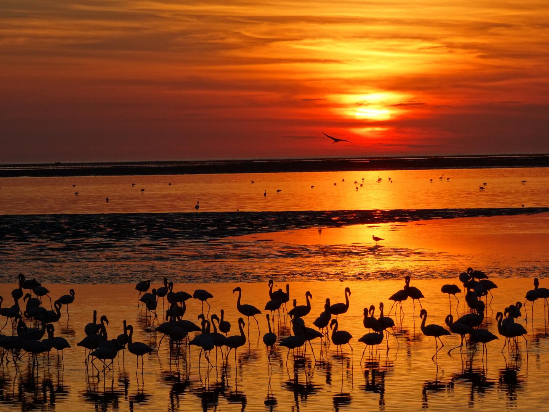 Flamingos in Gold