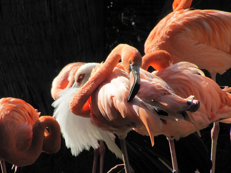 Flamingos in Gran Canaria