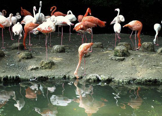 Flamingos in Hellabrunn | München