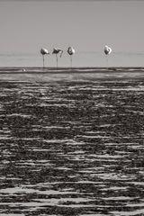 Flamingos - Namibia