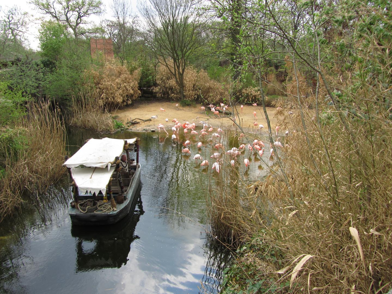 Flamingos voll konzentriert im Wasser