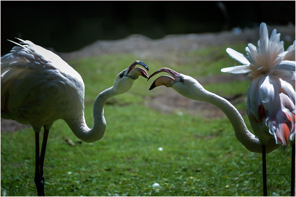 Flamingosprache....