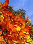 Flammen des Herbstes