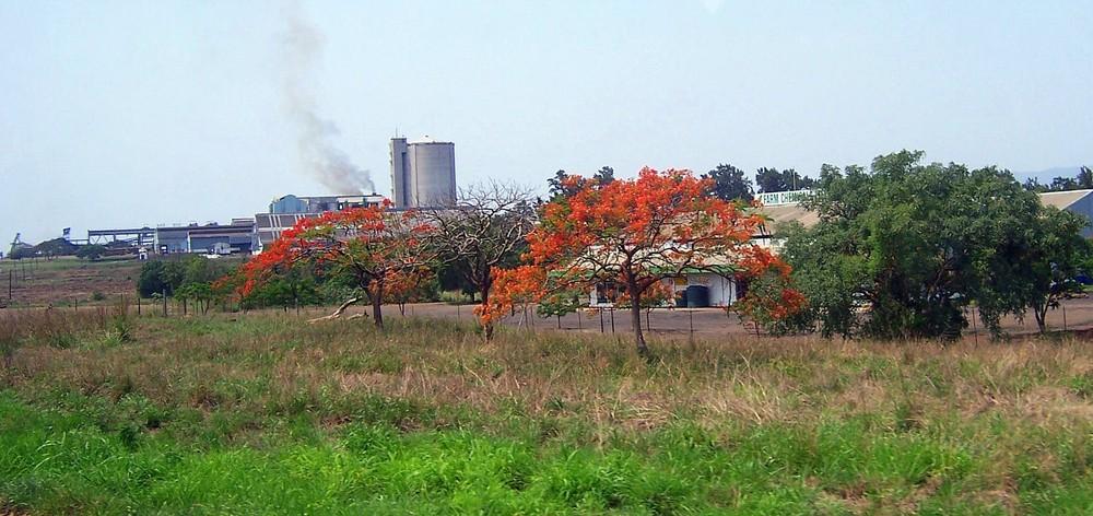 Flammenbäume