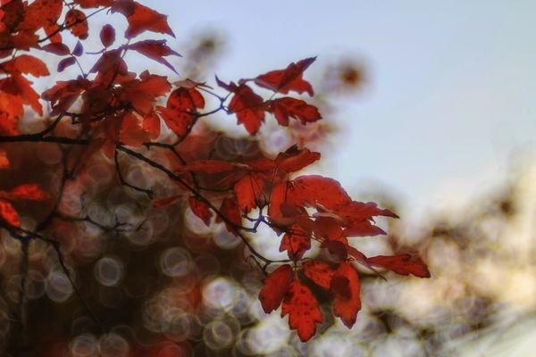 Flammend Rot
