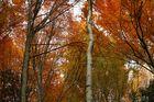 flammende Bäume