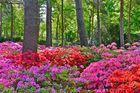 Flammende Mittwochsblümchen