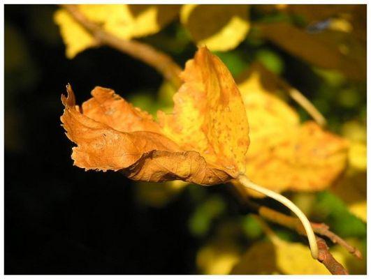 """flammender"" Herbst"