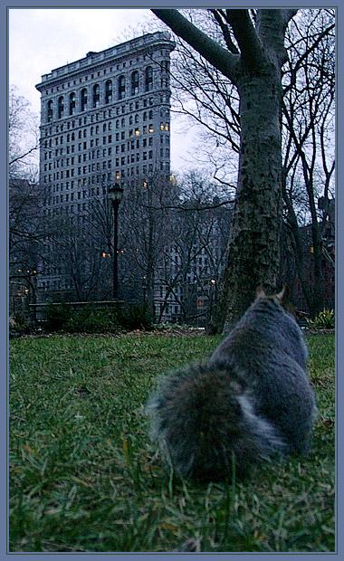 Flat Squirrel Building
