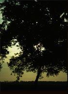 Flat Tree .