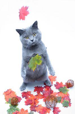 Flauschi im Herbst