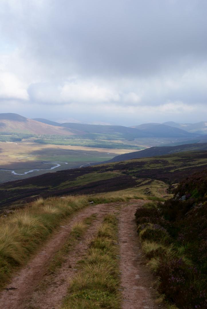 Flauschige Highlands 1