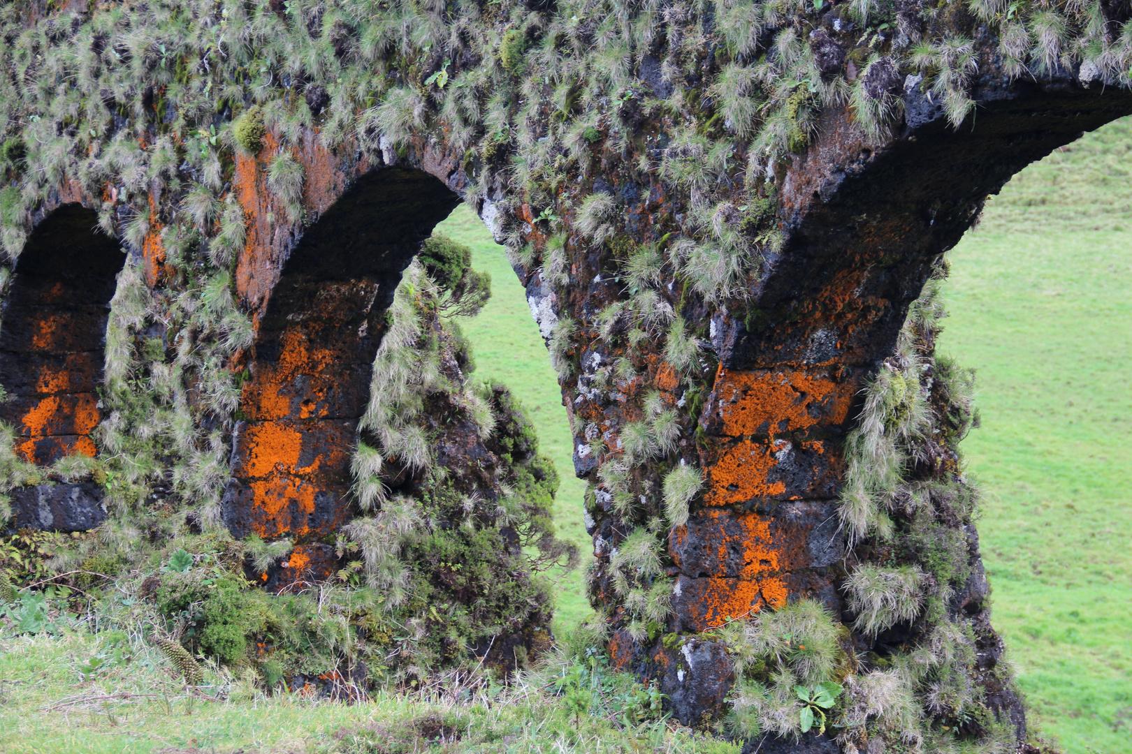 Flechten an Aquädukt