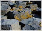 Flechten an Basalt