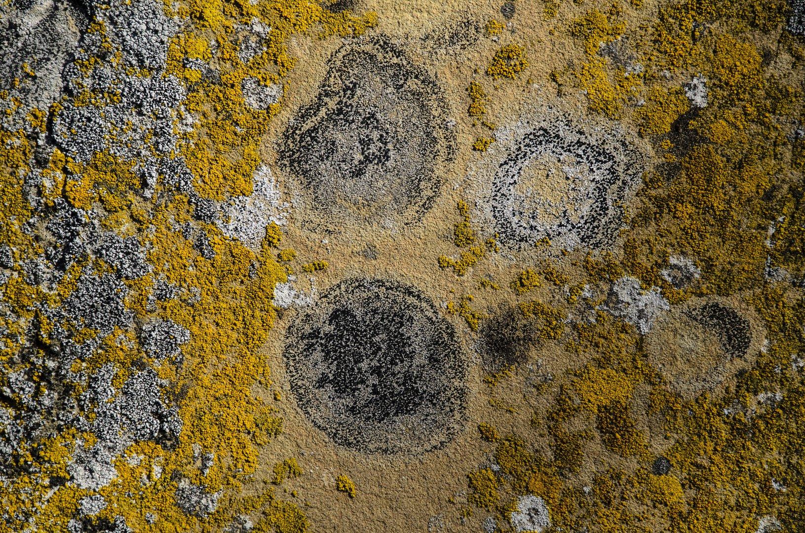 Flechten an einem Grabstein (1)