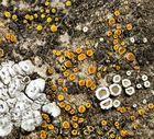 Flechtenensemble auf Muschelkalk