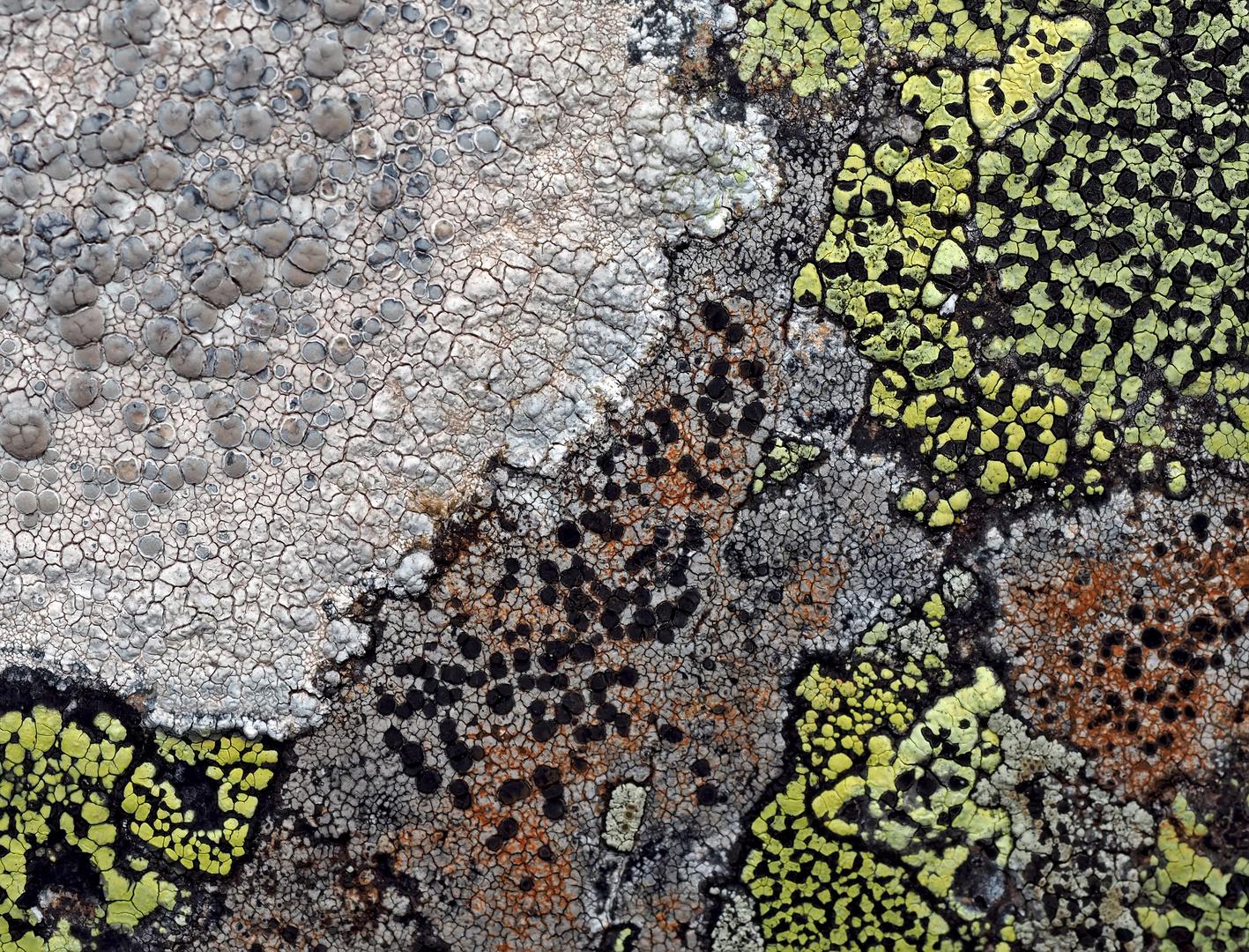 Flechtenfreuden! * - Les lichens réjouissent toujours par leurs belles couleurs!