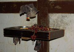 Fledermäuse 1