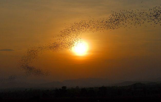 Fledermaus-Ausflug