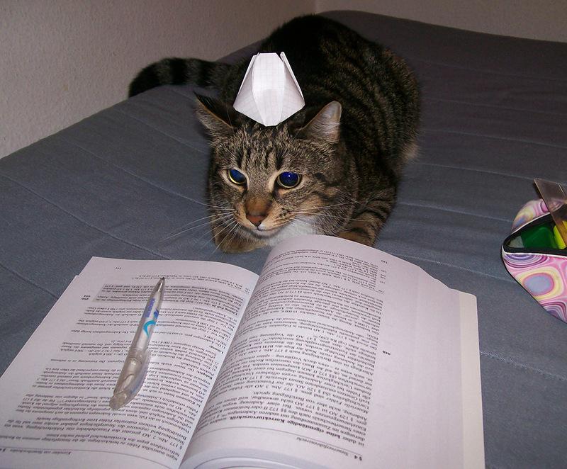 Fleißig am Lernen