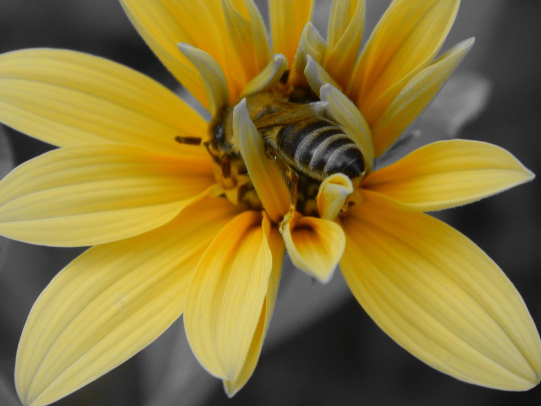 Fleißig wie eine Biene müsste man sein.
