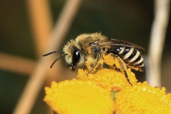fleißige Biene...
