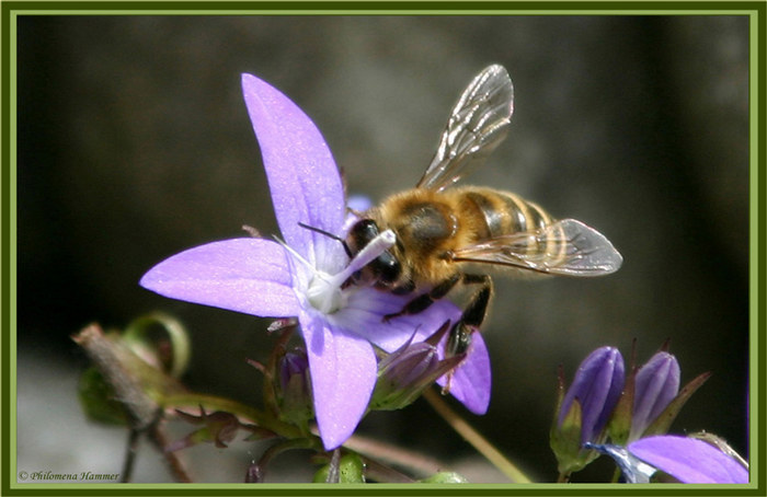 Fleißige Biene II