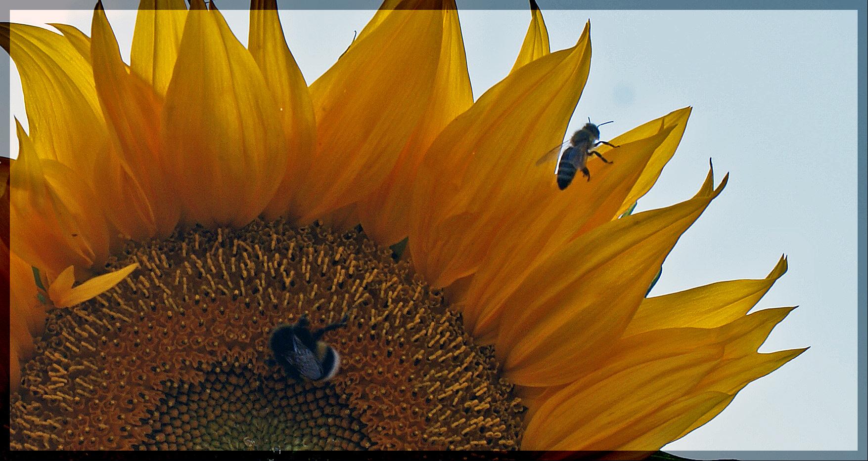 .........fleißige Bienen