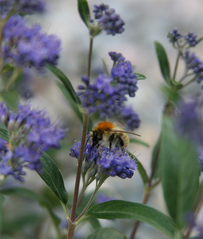... fleißiges Bienchen