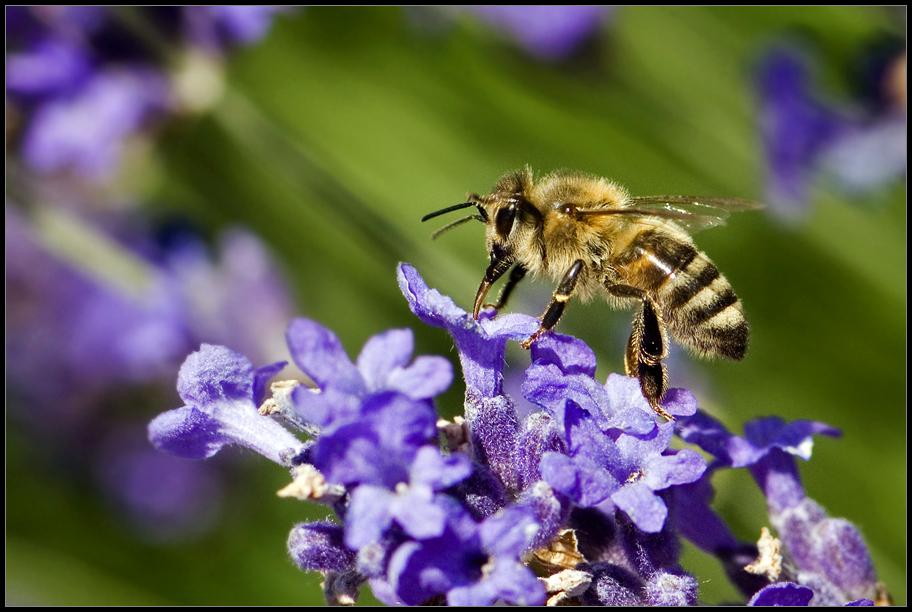 ++ fleißiges Bienchen ++