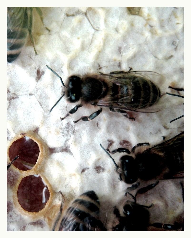 fleißiges Bienchen..
