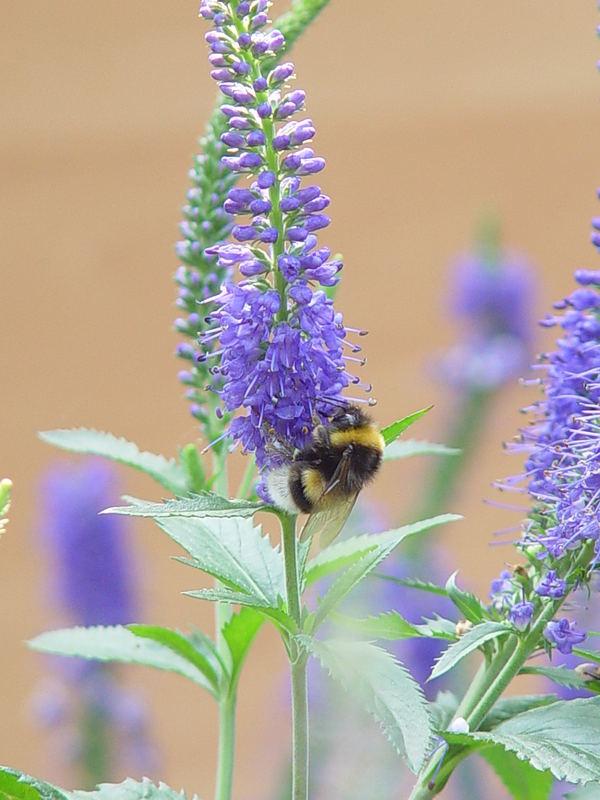 fleißiges Bienchen....