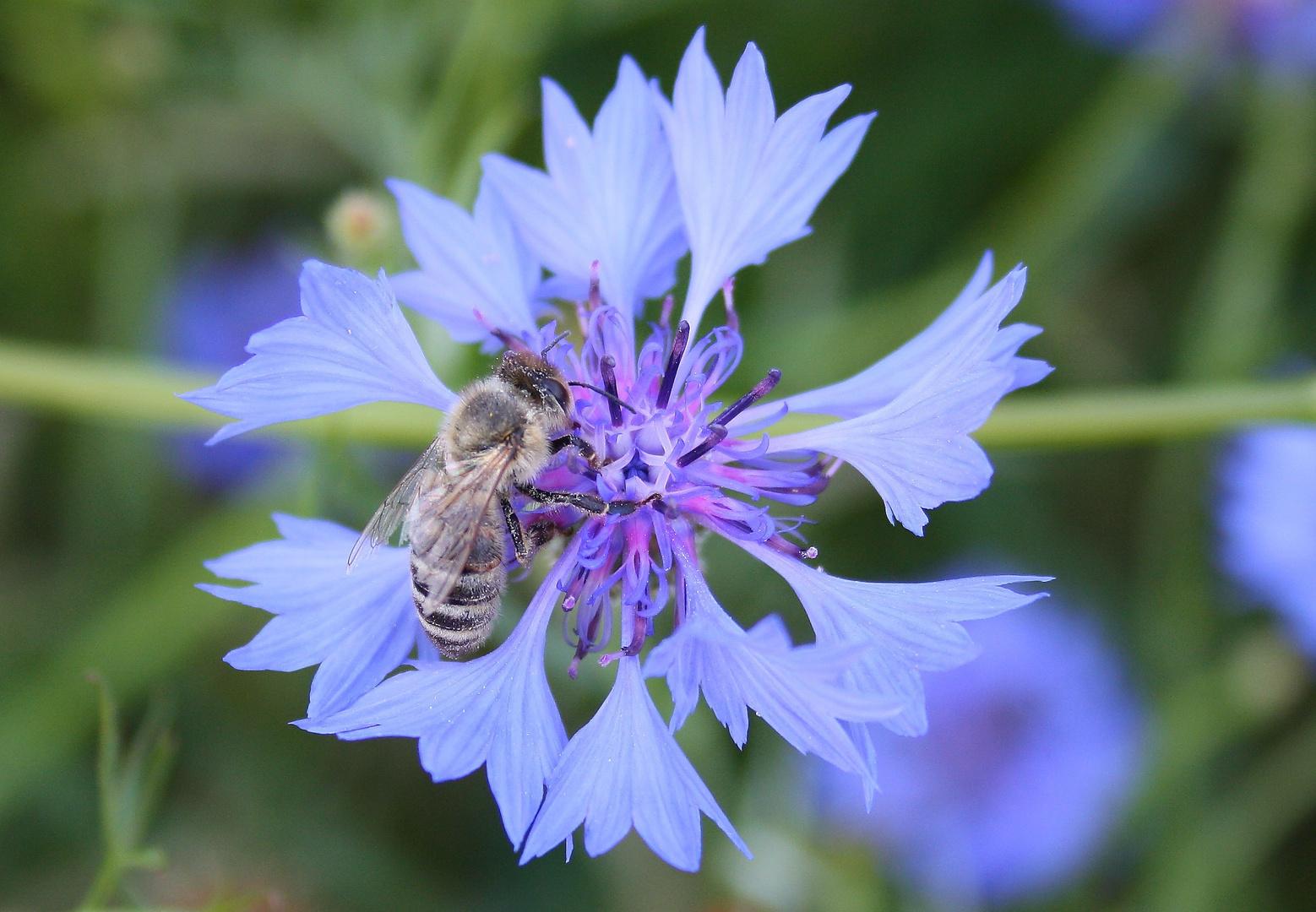 Fleißiges Bienchen........