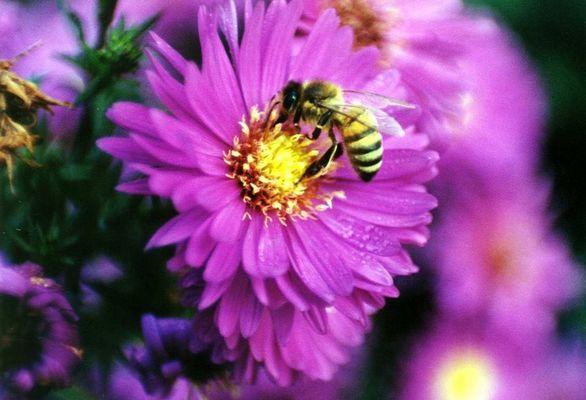 Fleißiges Bienchen