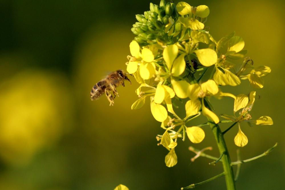 Fleißiges Bienchen im Oktober