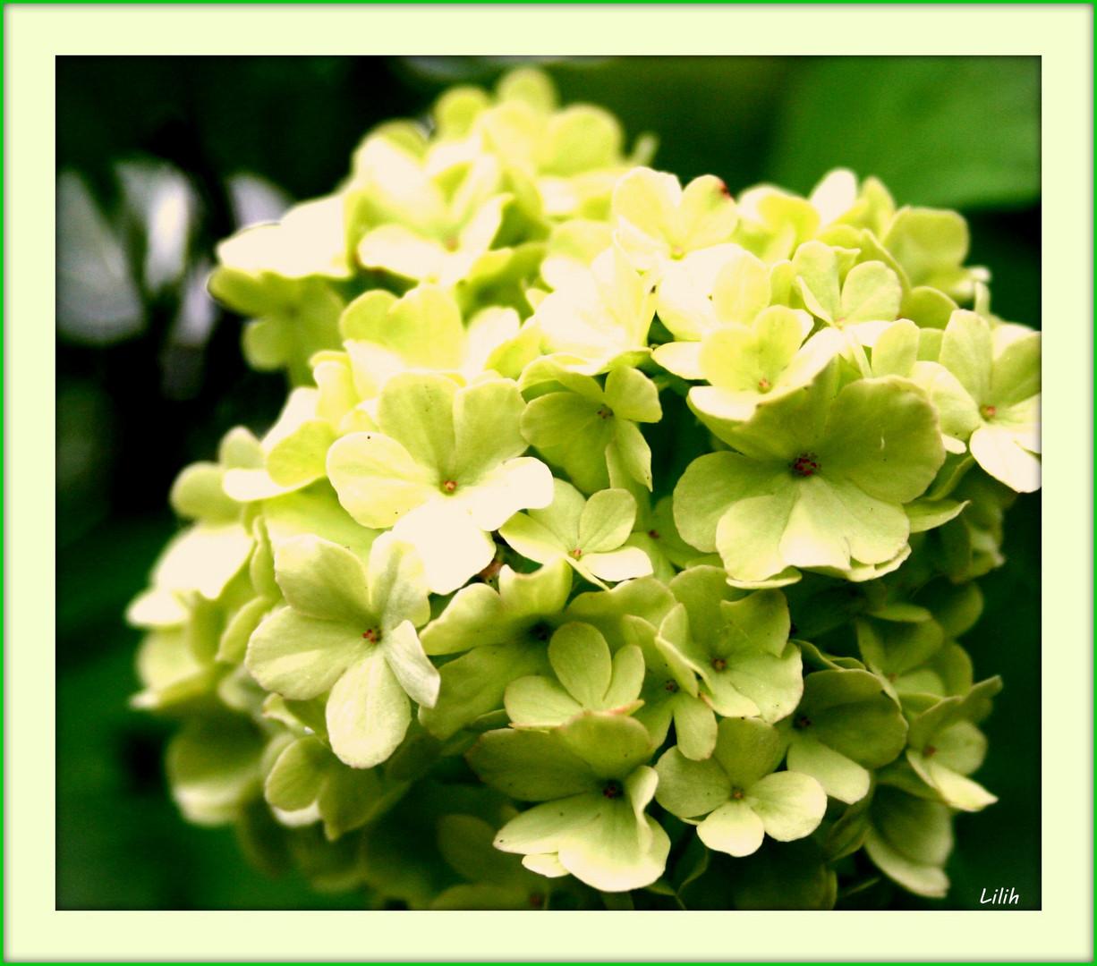 Fleur.....