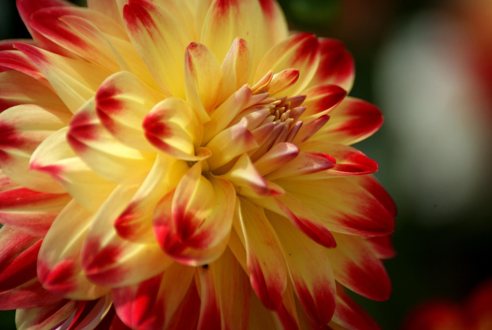 Fleur . . . .