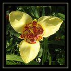 Fleur à trois pétales