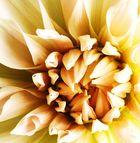 Fleur :