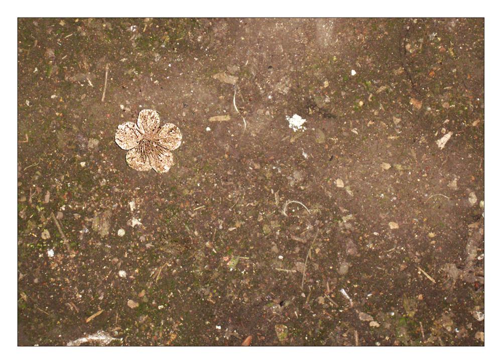 fleur abandonnée