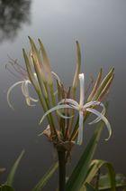 fleur au bord du lac