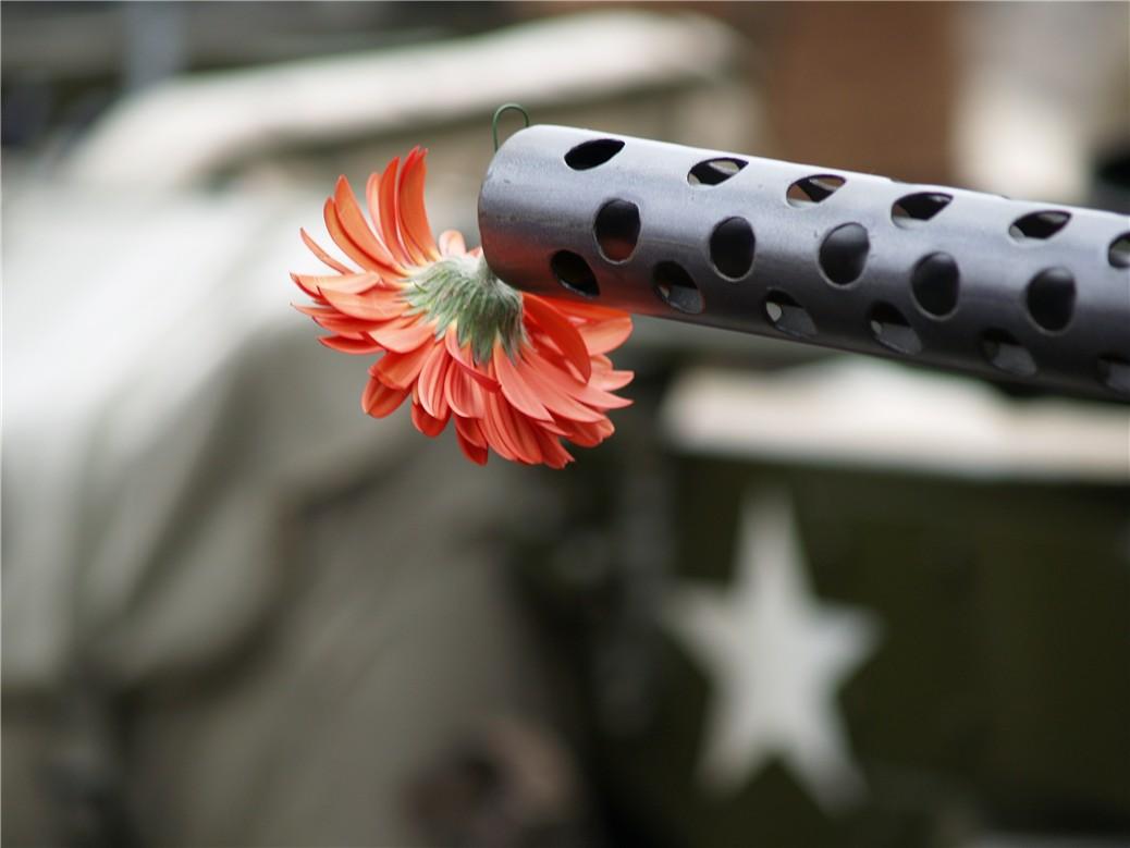 Fleur au canon