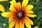 fleur au couleur du soleil