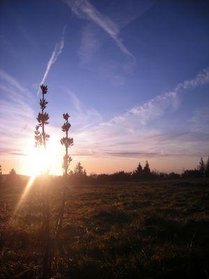 Fleur au lever du soleil.